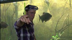 מגזו - דג טריגון